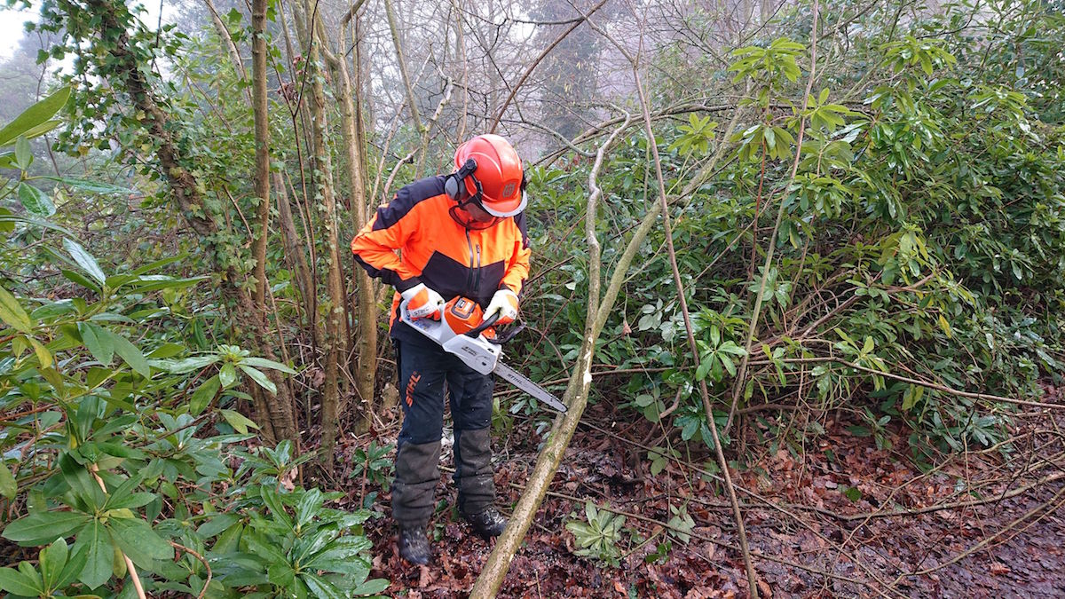 Coppicing2.JPG