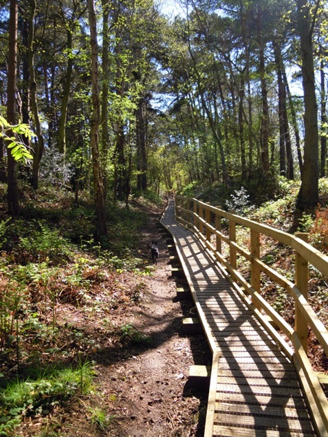 Pretty_Corner_Woods_boardwalk.jpg