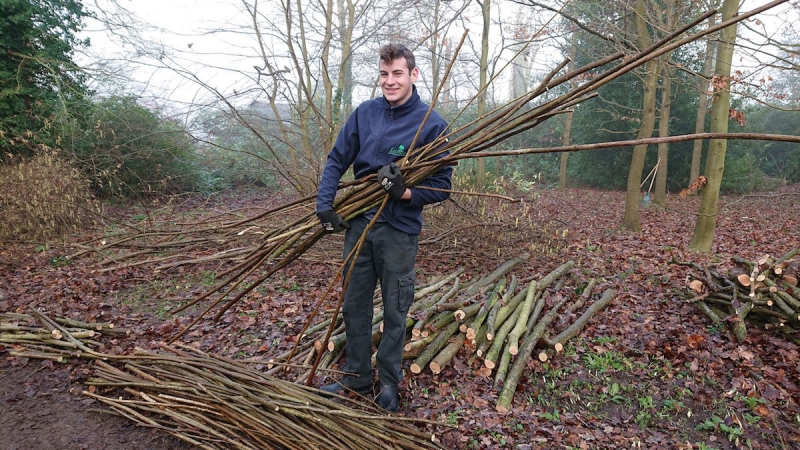 Fairhaven Woodland and Water Garden Winter Coppicing Campaign